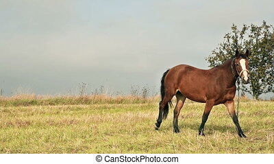 Horse at the green grass meadow - Horse pastures at the...