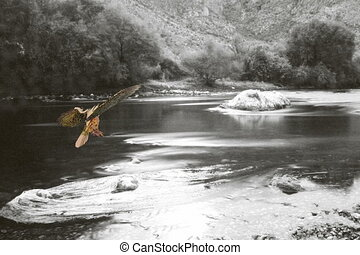 Fire bird seven - Fire bird flying down a monochrome river...