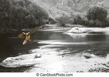 Fire bird seven - Fire bird flying down a monochrome river...