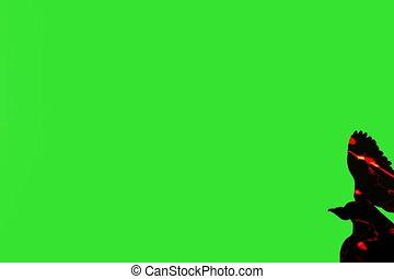 Fire bird Five - Fire bird isolated over green screen
