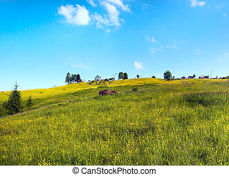 Summer mountain blossoming meadow.