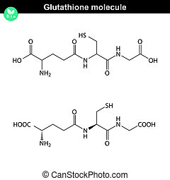 Glutathione chemical structure - antioxidant and regulator...