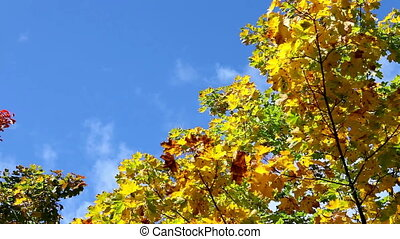 clouds in  blue sky over bright autumn trees