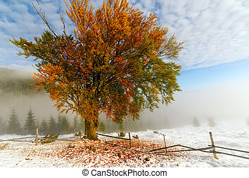 Colorful autumn trees with snow . snow  snow