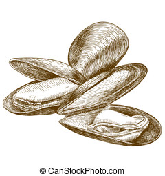 engraving illustration of mussel - Vector engraving...