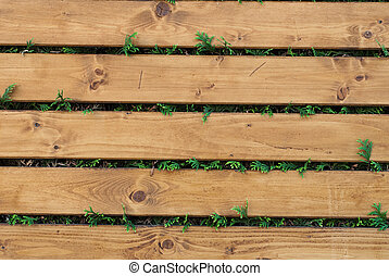 Wooden backgrond - Photo of old wooden planks with green...