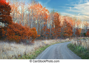 Dirt road and oak trees in autumn