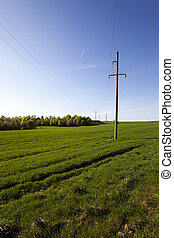 electric line in the field - electric line in the...
