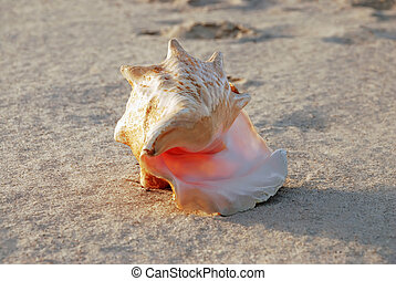 sea shell - One sea shell on the sand beach