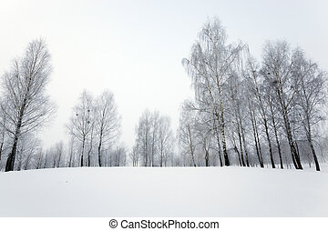 park in winter - trees photographed during the winter the...