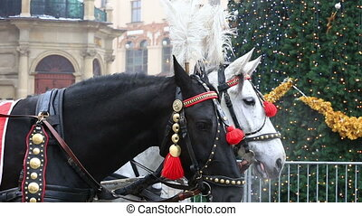 Carriage of white and black horses in festive harness,...