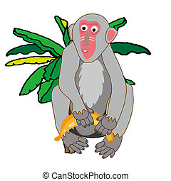 monkey with a banana tree - A gray monkey with a banana tree...