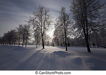 trees in the park in winter. the ground is covered with...