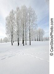Winter Park. snow. - trees in the park in winter. the ground...