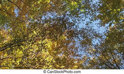 Lush tree crown against blue sky - Lush tree crown against...