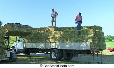 Farmers Loading Hay 02 - Farmers loading hay onto truck.