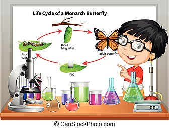 Boy presenting life cycle of butterfly