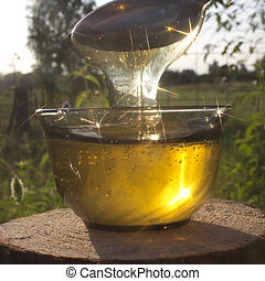 Honey in rays of the evening Sun - Stream of honey plays all...