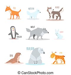 Arctic and Antarctic Animals, Penguin Vector Illustration -...
