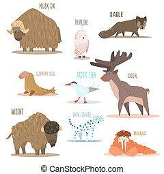Arctic and Antarctic Animals, Birds Vector Illustration -...