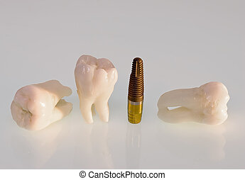 Teeth and implants - Real Human Wisdom teeth and Dental...