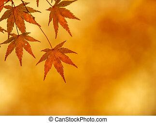 otoño, muy, superficial, foco, hojas