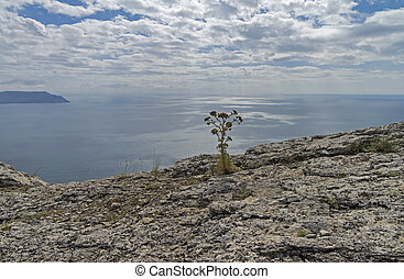 Flower on a rocky cliff above the sea.