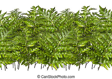 Fern - Seamless, endless pattern of branches and leaves...