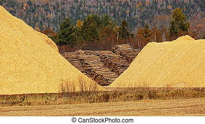 Wood Chips Sawdust Pile Logs - Pile of wood chips, sawdust...