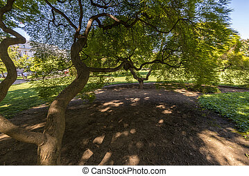 Under the tree - A shady green tree with bushy leaves