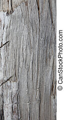 Close up of some weathered drift wood. Suitable for...