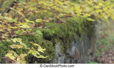 old retaining wall with moss - the destroyed old retaining...
