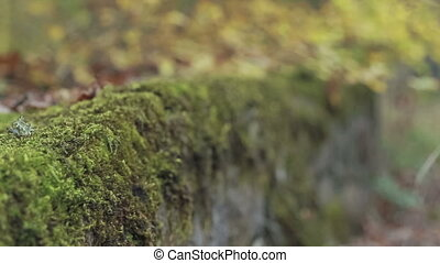 old retaining wall with moss - old stone fence by the...