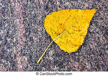 Colorful leaf in autumn.