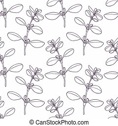 Hand drawn marjoram branch outline seamless pattern. Doodle...