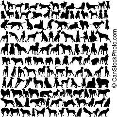 centenas, cão, silhuetas