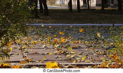 The wind blows away the yellow leaves from the road in the...