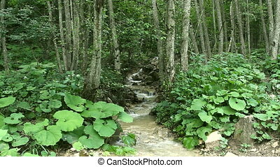 water of a forest stream running over rocks - Clean fresh...