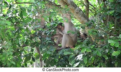 Monkey on tree at Pong Krathing Hot Spring is located at...