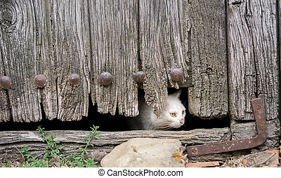 Wounded cat through old wooden door hole - Front view of...
