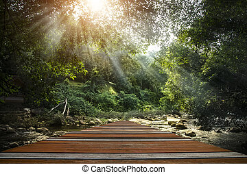 Wooden walkway into the forest.