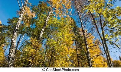Autumn Trees - Colorful autumn deciduous and coniferous...