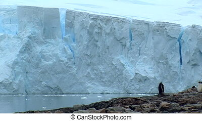 penguin in antarctica with huge glacier
