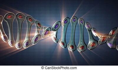 DNA model rotate