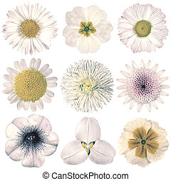 Various Vintage Retro Flowers Selection Isolated on White -...