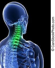 healthy neck - 3d rendered x-ray illustration of a human...