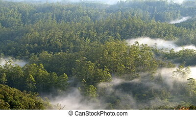 mist rolling over rainforest - hilltop view on the mist...