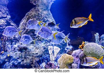 bonito, tropicais,  acquarium, Peixes, cheio