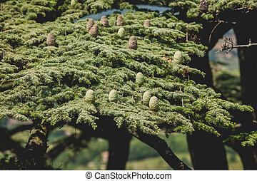 Young shoots of pine trees in the spring forest Horizontal...