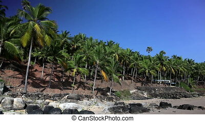 The seashore with palm trees India Kerala Landscape in a...